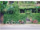 Những ngôi nhà tươi mát với cây xanh