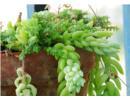Những loại cây cảnh độc không nên trồng trong nhà
